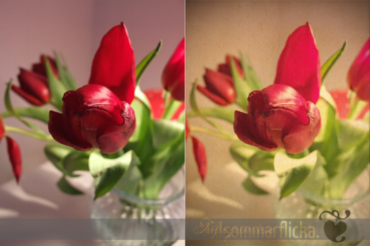 Tulip before & after « Midsommarflicka | So, it was weekend. And I was bored.