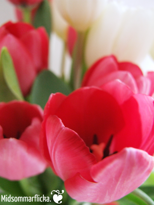 Tulip « Midsommarflicka | So, it was weekend. And I was bored.
