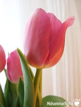 Cozy? Tulip! « Midsommarflicka #CreativeCollective