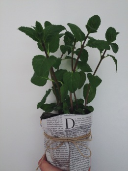 Newspaper 'flower pot' « Midsommarflicka #urbanjunglebloggers
