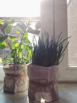 Window Sill « Midsommarflicka #urbanjunglebloggers